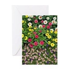 Colorful zinnia flowers Greeting Card