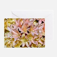 Pink and yellow rhododendrons Greeting Card