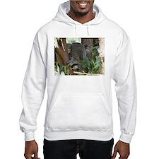 napping Koala Bear Hoodie