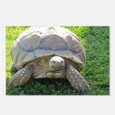 SULCATA TORTOISE Postcards (Package of 8)