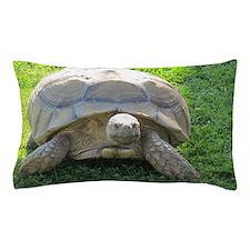 SULCATA TORTOISE Pillow Case