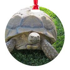 SULCATA TORTOISE Ornament