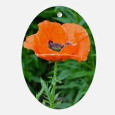 Singel orange poppy flower Oval Ornament