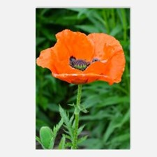 Singel orange poppy flowe Postcards (Package of 8)