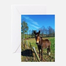 Brown donkey in field Greeting Card
