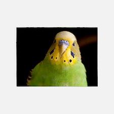Green Parakeet 5'x7'Area Rug
