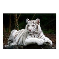 White Tiger Cub Postcards (Package of 8)