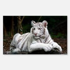 White Tiger Cub Decal