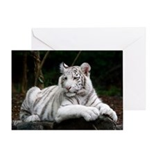 White Tiger Cub Greeting Card