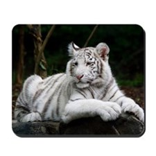 White Tiger Cub Mousepad