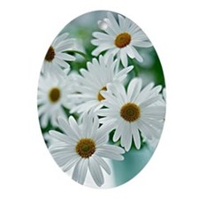 Daisies in Bloom Oval Ornament