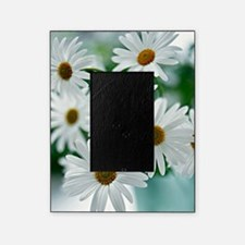 Daisies in Bloom Picture Frame