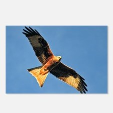 Flying Red Kite Postcards (Package of 8)