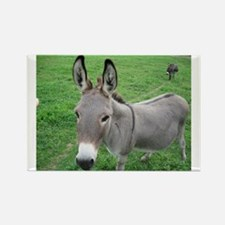 Miniature Donkey Rectangle Magnet