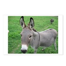 Miniature Donkey Postcards (Package of 8)