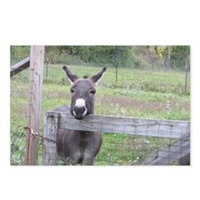Miniature Donkey II Postcards (Package of 8)