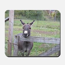 Miniature Donkey II Mousepad