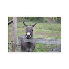 Miniature Donkey II Rectangle Magnet