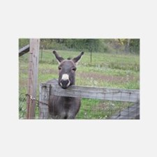 Miniature Donkey II Rectangle Magnet