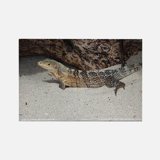 Spiny-Tailed Iguana Rectangle Magnet