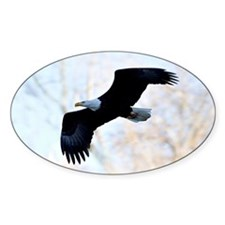 Bald Eagle Decal