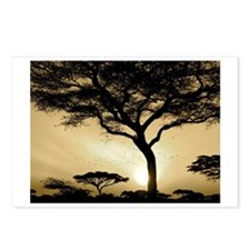 ACACIA TREES AND BIRDS Postcards (Package of 8)