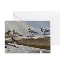 Sandpiper Gathering Greeting Card