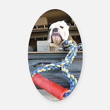 English bulldog with tug toy Oval Car Magnet