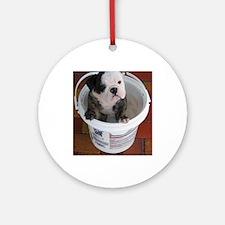 English bulldog puppy in a bucket - Detail Ornamen
