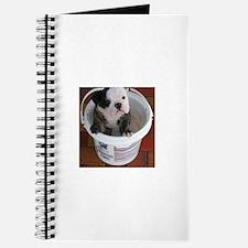 English bulldog puppy in a bucket - Detail Journal