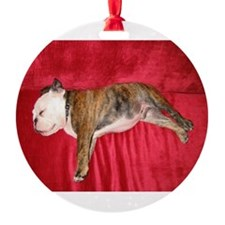English bulldog puppy sleeping on a red couch Orna
