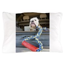 English bulldog with tug toy Pillow Case