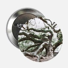 """Angel Oak  Treee with photoshop  2.25"""" Button"""