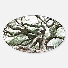 Angel Oak  Treee with photoshop  Decal
