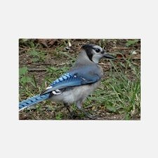 blue jay takin a walk Rectangle Magnet