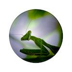 Praying Mantis 3.5