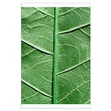 Veined Green Leaf Large Poster