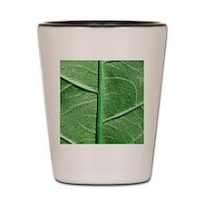 Veined Green Leaf Shot Glass