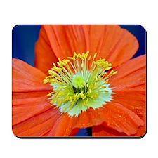Ornamental Poppy Mousepad