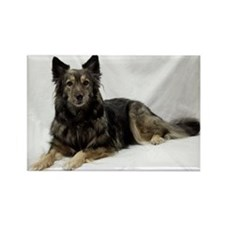 Maia--Keeshond/Cattle Dog/Border  Rectangle Magnet