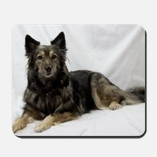 Maia--Keeshond/Cattle Dog/Border Collie  Mousepad