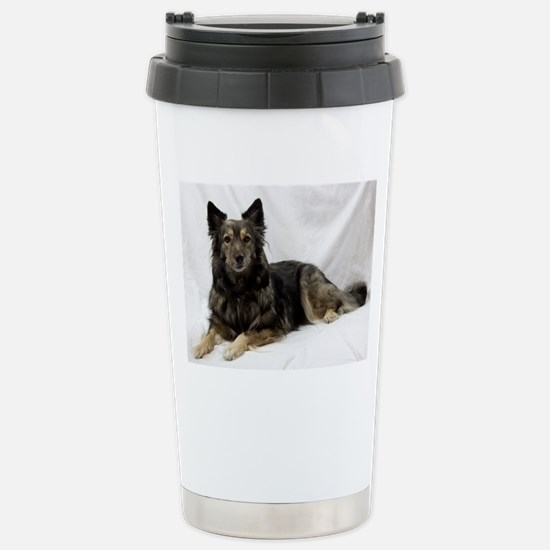 Maia--Keeshond/Cattle D Stainless Steel Travel Mug