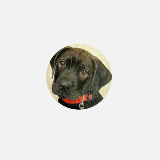 Black Labrador Puppy Portrait with Pea Mini Button