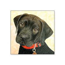 "Black Labrador Puppy Portra Square Sticker 3"" x 3"""