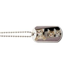 Bengal Kittens Dog Tags