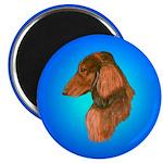 Long Coated Dachshund Profile 2.25