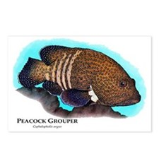 Peacock Grouper Postcards (Package of 8)