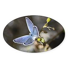 Karner Blue Butterfly Decal
