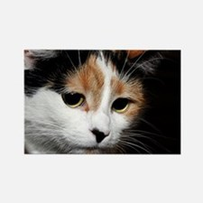 Calico Cat Chiara Magnets