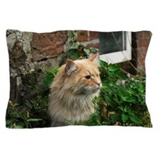 Maine Coon Cat Kato Pillow Case